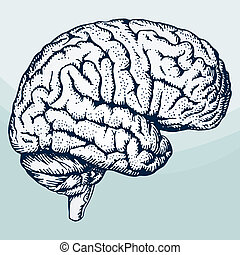 Human brain on light blue background