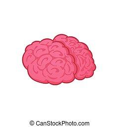 Human brain on white background, vector illustration, cartoon