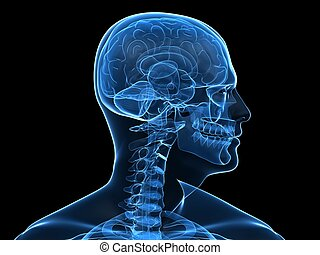 3d rendered x-ray illustration of human head with highlighted brain