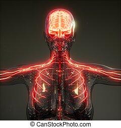 Human Brain Radiology Exam