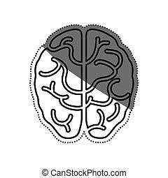 Human brain symbol