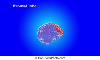 human brain The structure of the - The structure of the...