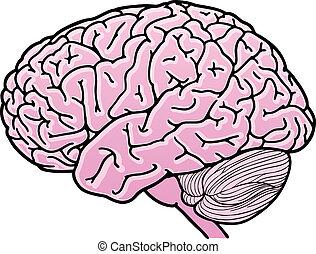 Human brain - Vector illustration of a human brain