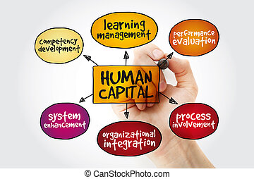 Human capital mind map with marker, business management...