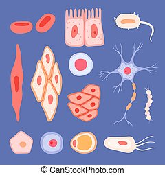 Human cells. Biological structure of blood scenes collection lymphocyte vector flat pictures of cells