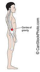 Human centre of gravity - Adult male centre of gravity