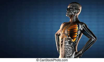 human chest radiography scan