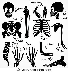 human, cobrança, esqueleto