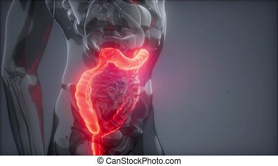 science anatomy scan of human colon glowing
