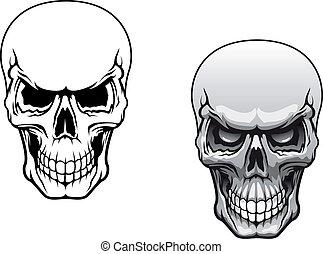 human, crânios