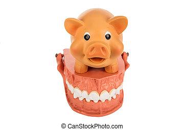 Human Dentures Model with Piggy Bank