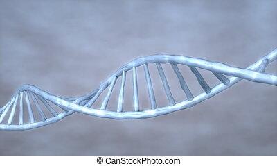 Human DNA.
