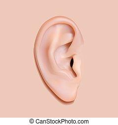 Human ear photo-realistic. Isolated