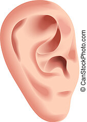 Human ear isolated on white photo-realistic vector illustration