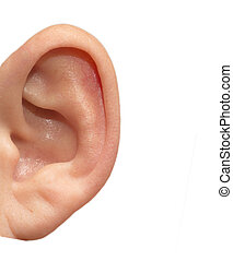 human ear on white background
