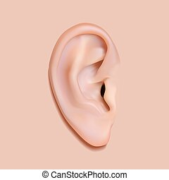 Human ear photo-realistic. Isolated