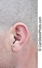 human ear - close up of male ear