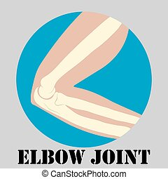 Human elbow joint
