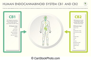 Human Endocannabinoid System CB1 and CB2 horizontal business...