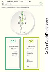 Human Endocannabinoid System CB1 and CB2 vertical business ...