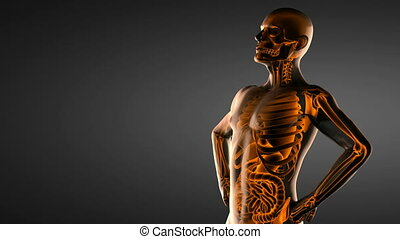 human entrails radiography scan