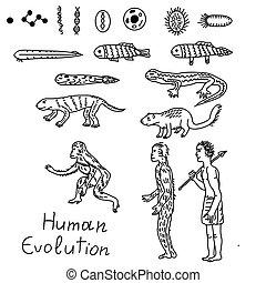 Human evolution illustration