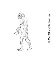 Human evolution digital illustration, homo erectus, australopithecus, homo habilis, neanderthal, cromagnon