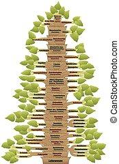 Human Evolution Tree of Life German
