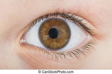 Human eye brown color. Close up studio shot