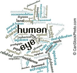Human eye - Abstract word cloud for Human eye with related...