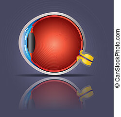 Human eye - detailed eye anatomy. Beautiful bright colors.