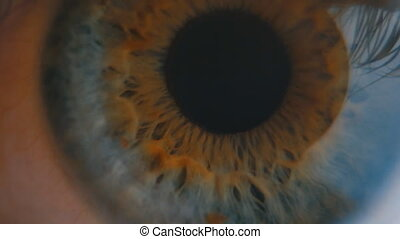 Human eye iris contracting. Extreme close up. - Human eye...