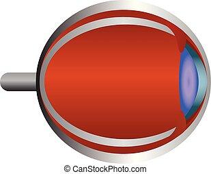 Human eye structure. Eye anatomy vector illustration