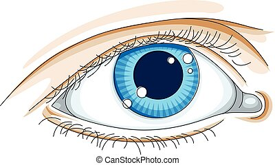 Human eye vector illustration isolated on white background.