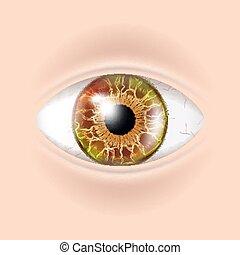 Human Eye Vector. Visual Examination. Body Check. Realistic...
