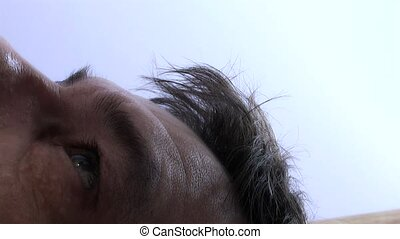Human Eye,