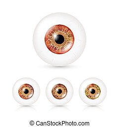 Human Eyeballs Set With Big Irises In Colour. Vector Illustration Of 3d Glossy Detailed Eye With Shadow And Reflection. Cornea. Front View. Isolated On White Background