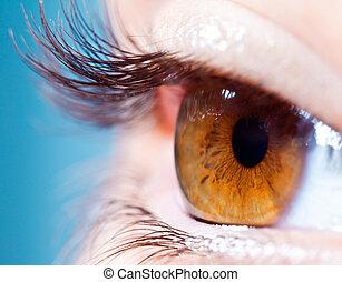 Human eyelashes close up. Focus on eyelashes.