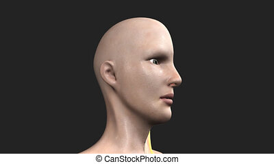 Human Face Intersection - The facial muscles are a group of...