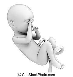 Human fetus