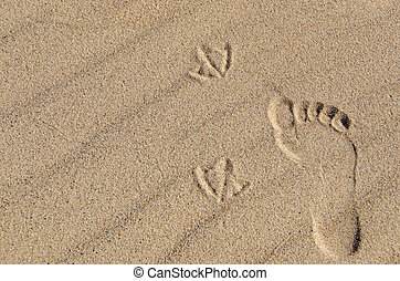 footprint and seagull tracks - Human footprint and seagull...