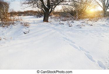 Winter landscape on sunset.