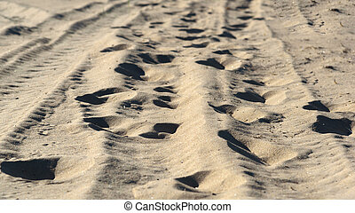 human footprints on the beach sand in forest