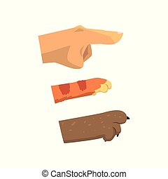 Human hand, cat and dog paw pointing right, pet shop,...