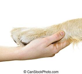 Human hand holding dog paw isolated on white background