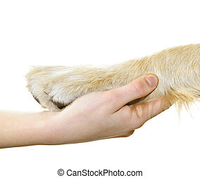 Human hand holding dog paw isolated on white background