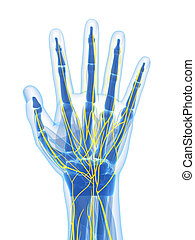 Human hand nerves - 3d rendered illustration of the human...