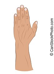 Human hand raised up on a white background. Vector illustration of a brush with fingers. Hand drawing