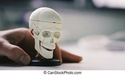 Human hand rotates the layout of a human skull