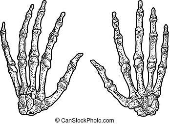 Human hand skeleton illustration, drawing, engraving, ink, line art, vector
